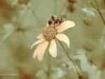 Bee & daisy sepia