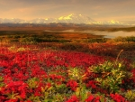 Red Flowers and Snowy Mountain