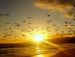 flock of sea birds over a beach at sunset