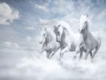 Horses Paint