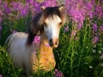 Horse in Lavender Field