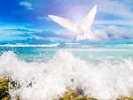 Dove Above Ocean