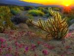 superlative desert sunset hdr