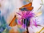 Moths on Flower