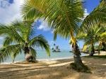 Tropical,Paradise