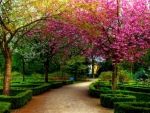 serene walkway hdr