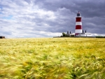 beautiful lighthouse in a golden wheat field