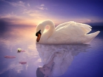 Princess or swan