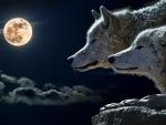 Torque Wolfs
