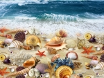 ~*~Treasures of the sea~*~