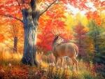 Autumn Beauty of Deer