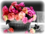 ROSES for my Friends ♥