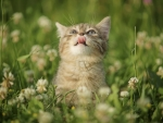 curiosity kitten in the garden