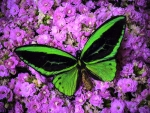 ✿⊱•╮Large Green Butterfly╭•⊰✿