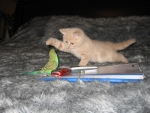 Kitty Playing with Bird