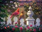 Cardinals in Garden