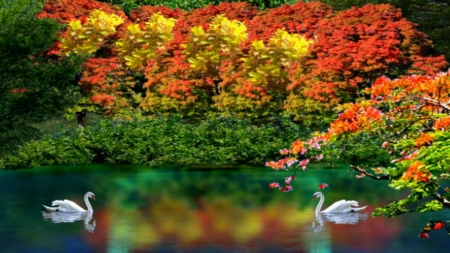 ~*~ Autumn Reflections ~*~ - fall, autumn, swans, fall trees, autumn colors, HD wallpaper, nature, autumn reflections, fall lake, landscape