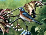 Bluebird Bounty