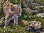 Bobcat Encounter