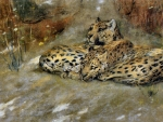 East African Leopards