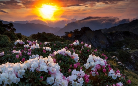 Sunset - flowers, Sunset, landscape, mountains