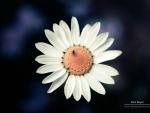 Bug & daisy