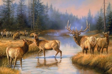 Autumn Mist Deer Amp Animals Background Wallpapers On