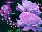 Lavender Star Roses