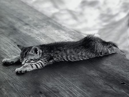 I'm Sleeping Right Here - kitten, cats, black and white