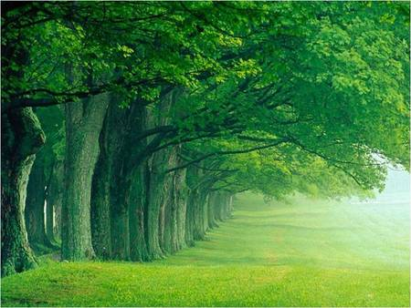 Green Nature - nature, 1, trees, green