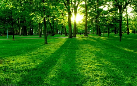 Green Forest - eliseu, sun, g, green, spring, trees, nature