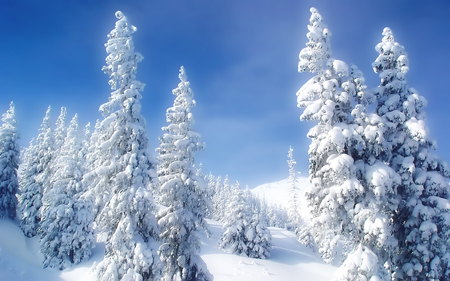 winter - fondecran, snow, widescreen, winter, cold, landscape