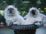 Kittens in the birdbath