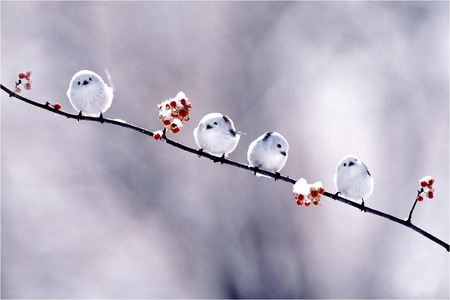 Small White Birds - small, branch, birds, white