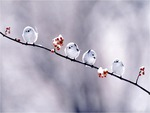 Small White Birds