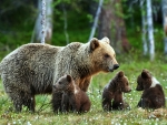 Mother Bear and her Three Cubs