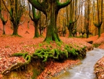 Autumn_in_Forest