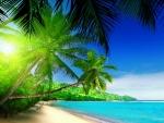 |Tropical paradise