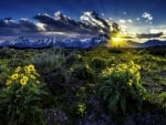 Sunrise over the Flowers Field