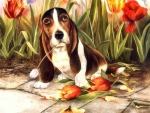 Dogs & Tulips