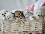 Basket full of Kitties