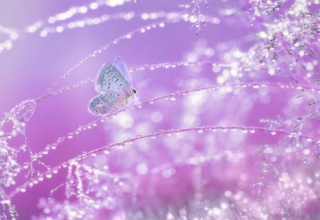 SPARKLING MORNING - DEW, WINGS, PINK, SPARKLING, ANIMAL, BUTTERFLY