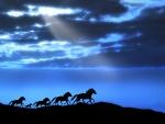 Horse Running at Moonlight Night