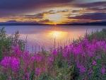 Lake under the Midnight Sun