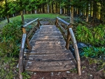 lovely wooden bridge in a forest hdr
