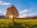 autumn sun rays hdr
