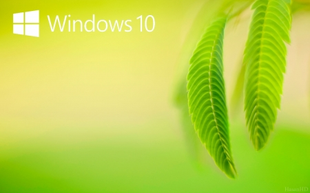 Windows 10 Natural Hd Grass Nature Background Wallpapers On
