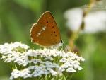 Butterfly XII.