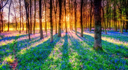 Forest sunlight - forest, glow, beauitful, sunlight, sunbeams, trees, rays, wildflowers, summer, morning
