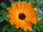 A Pretty Orange Flower